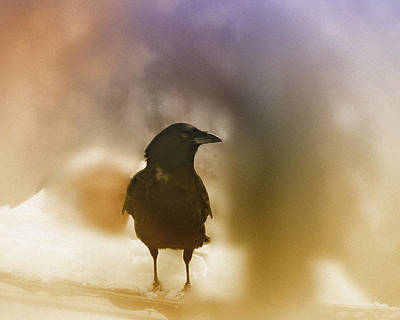 April Raven Print by Susan Capuano