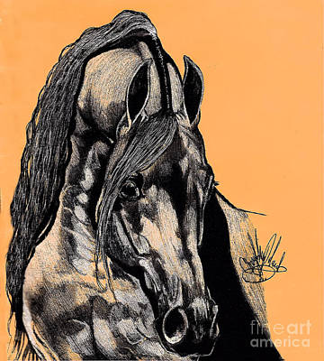 Ink Drawing Drawing - Arabian Purebred by Cheryl Poland