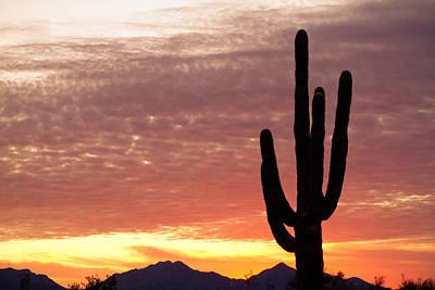 Southwest Art Photograph - Arizona Saguaro Sunrise by James BO  Insogna