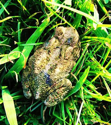 Photograph - Arkansas Frog by Todd Sherlock