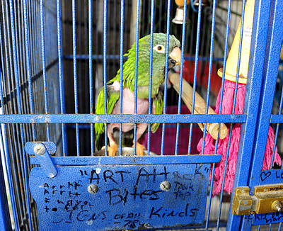 Parakeet Photograph - Art At Mahuffers by David Lee Thompson
