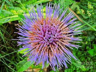 Sean Photograph - Artichoke Blossom by Sean Griffin
