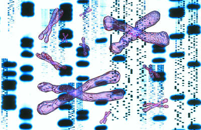 Artwork Of Dna Sequences And Chromosomes Print by Pasieka