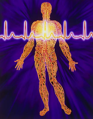 Artwork Of Human Venous System And Ecg Heart Trace Print by Mehau Kulyk