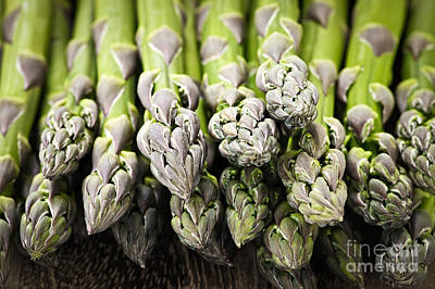 Sprout Photograph - Asparagus by Elena Elisseeva
