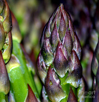 Asparagus Tips Original by Nancy Mueller