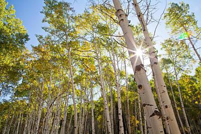 Aspen Grove Sunburst Original by Adam Pender
