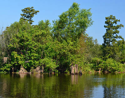 Atchafalaya Basin 46 Print by Maggy Marsh