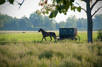 Amish Photograph - August Buggy by David Arment