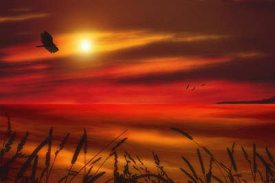 August Sunset Print by Tom York Images