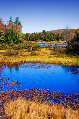 New York Photograph - Adirondack Color by David Patterson