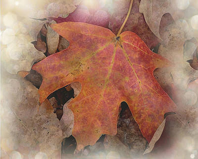 Mission Ventures Photograph - Autumn Dance by Terry Eve Tanner