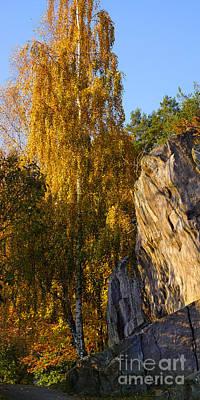 Autumn Scene Photograph - Autumn Grace by Lutz Baar