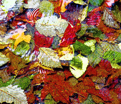 Leaf Photograph - Autumn In Water by Marie Jamieson