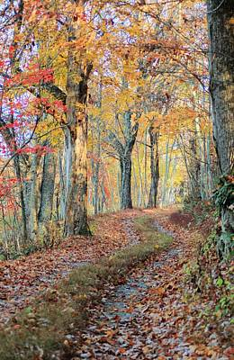 Autumn Lane Print by Heavens View Photography