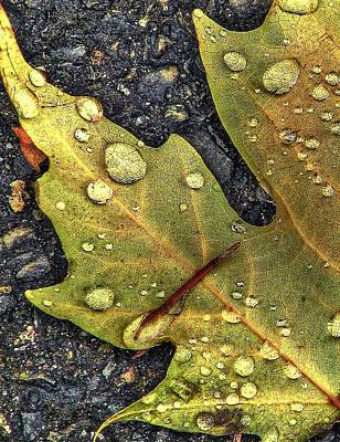 Matix Photograph - Autumn Leaf Hdr by Chris Anderson