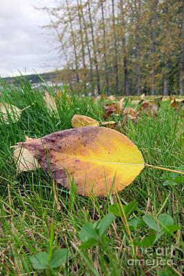 Autumn Leaf On Green Print by Michelle Bergersen