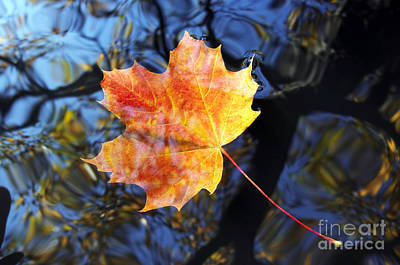 Falltime Photograph - Autumn Leaf On The Water Level by Michal Boubin