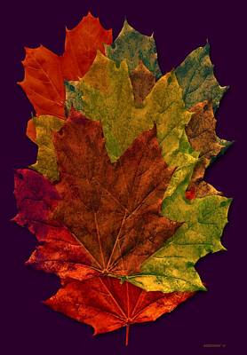 Effect Photograph - Autumn Leafs Digital Art by Mario Perez