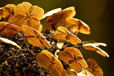 Autumn Light Print by Carolyn Marshall