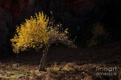 West Fork Photograph - Autumn Light by Mike  Dawson