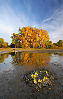 Autumn Nest Print by Mircea Costina Photography