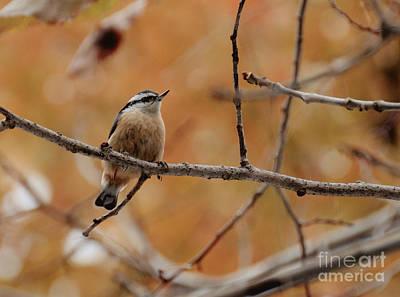 Autumn Photograph - Autumn Perch by Cheryl Baxter