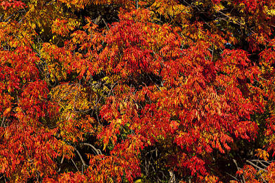 Autumn Red Print by Garry Gay