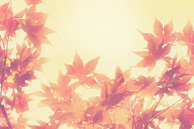 Fall Leaves Photograph - Autumn Sky by Amy Tyler
