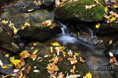 Autumn Stream Monongahela National Forest Print by Thomas R Fletcher