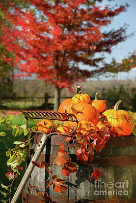 Vivid Fall Colors Photograph - Autumns Colorful Harvest  by Sandra Cunningham