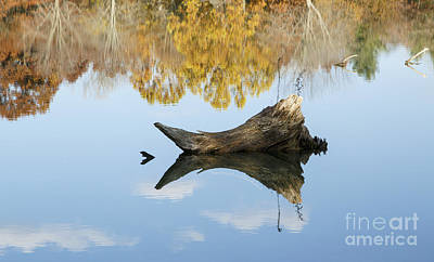 Autumn's End Reflection Print by Diane Zumbach