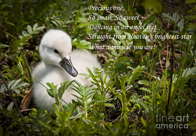 Swan Photograph - Baby Card - Mute Swan by Michael Cummings