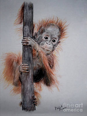 Orangutan Drawing - Baby Orangutan  by Jim Fitzpatrick