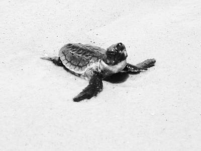 Baby Sea Turtle  Print by Lillie Wilde