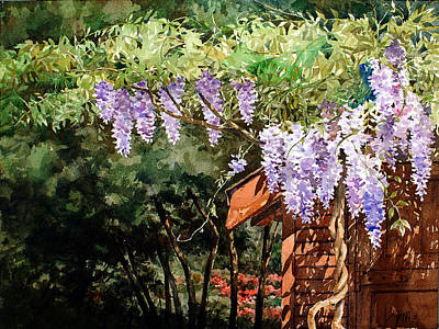 Watercolor Wisteria Painting - Backyard Wisteria by Peter Sit