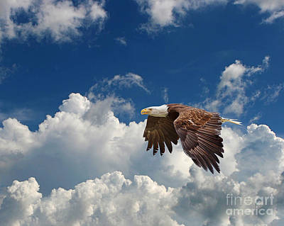 Bald Eagle In The Clouds Print by Dale Erickson