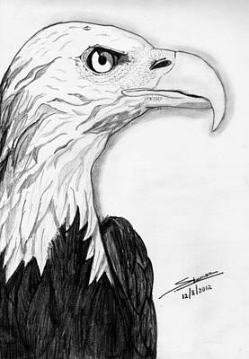 Shashi Kumar Drawing - Bald Eagle by Shashi Kumar