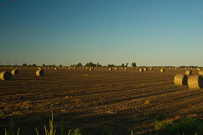 Bales In Peanut Field 9 Print by Douglas Barnett