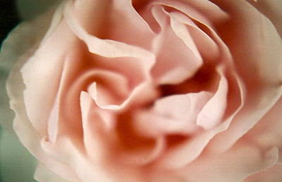 Ballerina Pink Print by Claudia Smaletz