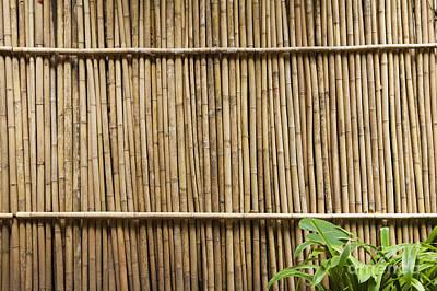 Bamboo Fence Photograph - Bamboo Fence by Don Mason