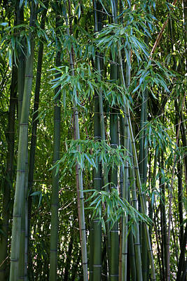 Bamboo Tree Print by Athena Mckinzie
