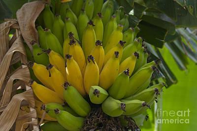 Banana Digital Art - Banana by Sharon Mau