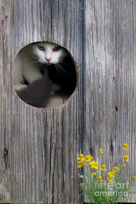 Barn Kitty Print by Benanne Stiens