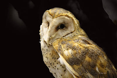 Barn Owl In A Dark Tree Print by Roena King