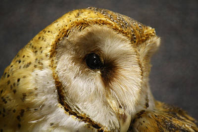 Barn Owl Portrait Print by Roena King