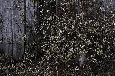Possum Photograph - Barn Pets by Ron Jones