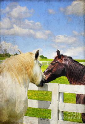 Kentucky Horse Park Photograph - Barn Yard Kisses by Darren Fisher