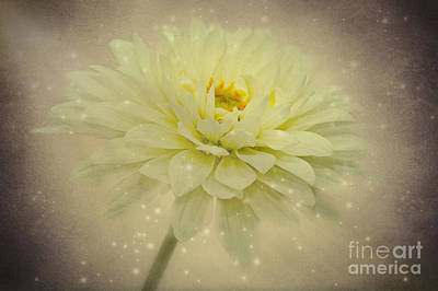 Aster Mixed Media - Be A Star by Angela Doelling AD DESIGN Photo and PhotoArt