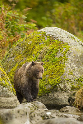 Prints Of Alaska Photograph - Beach Combing by Tim Grams